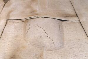 sequoia-03